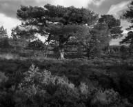 Rothiemurchus Forest - Aviemore