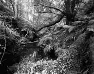 The Kip Burn, Greenock