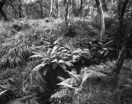 Woodlands near Kinlochleven
